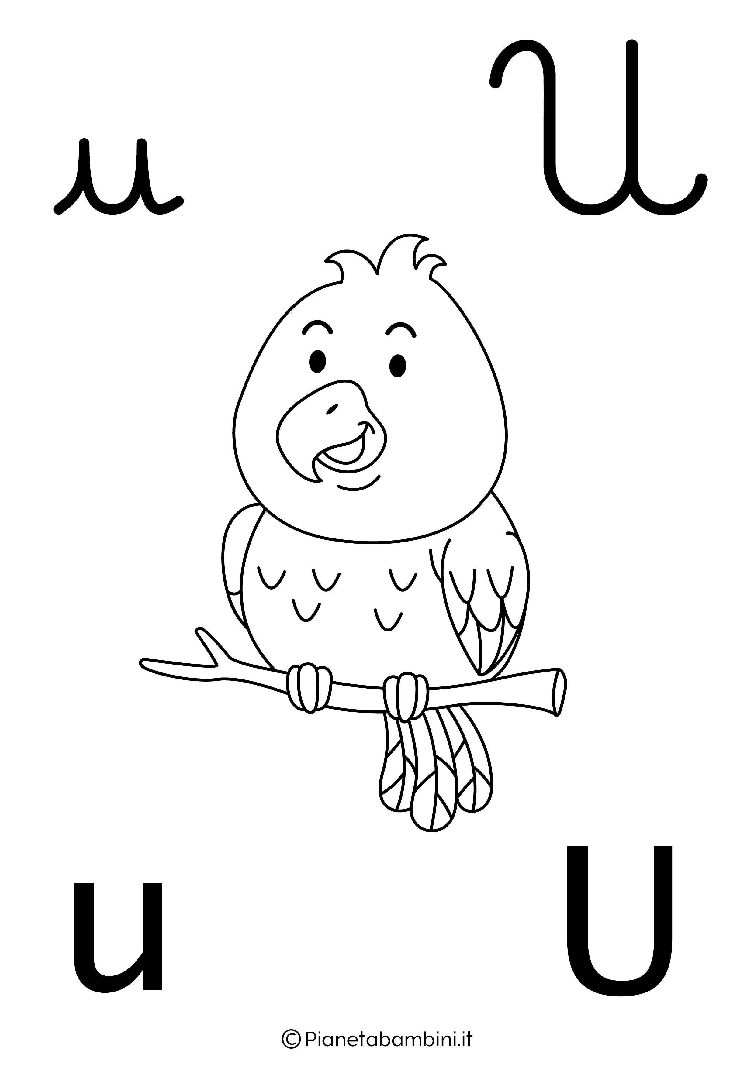 Alfabetiere lettera U da colorare