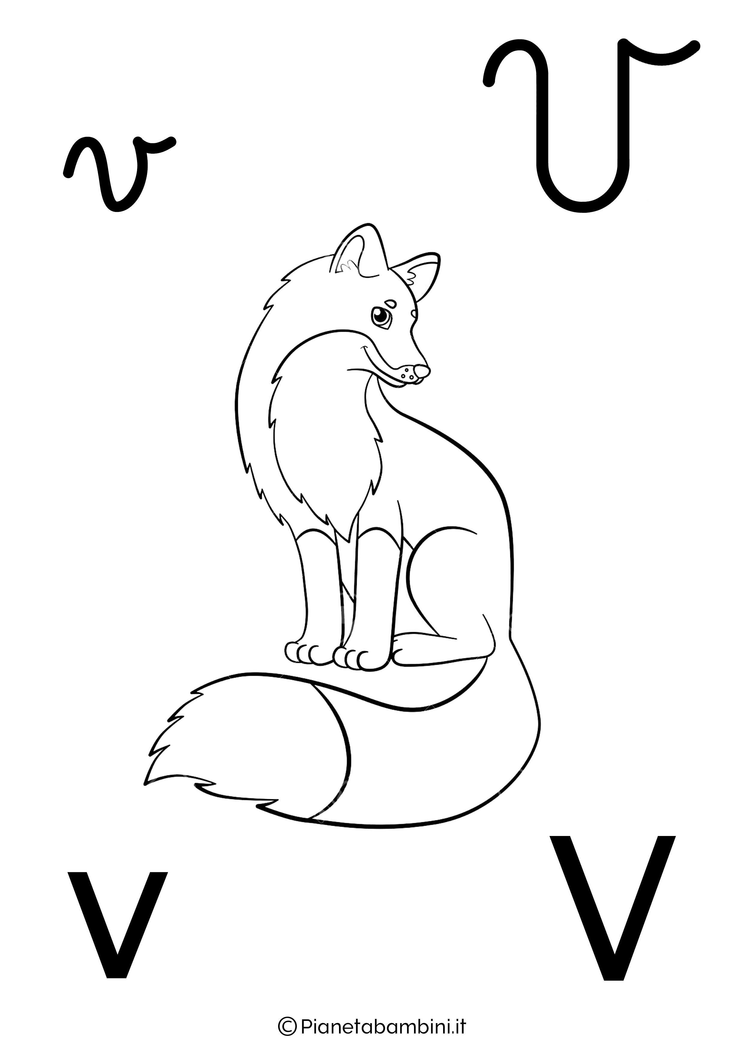 Alfabetiere lettera V da colorare