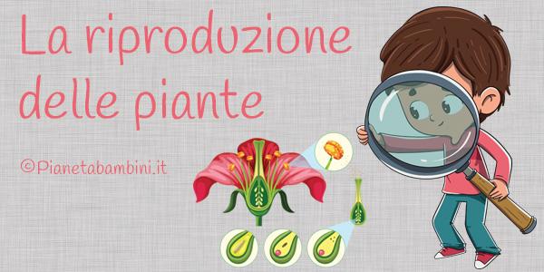 Esercizi sulla riproduzione delle piante per la scuola primaria