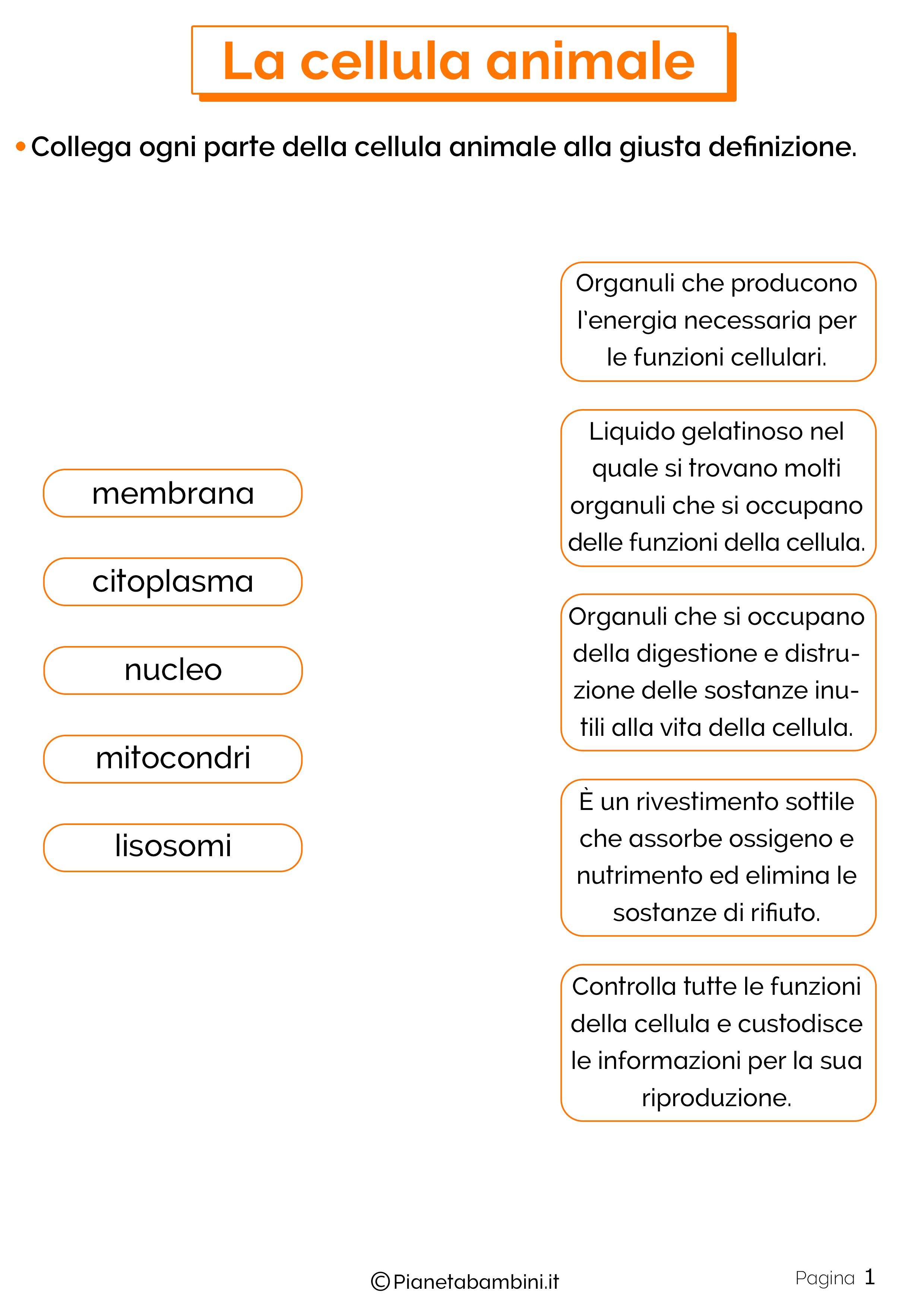 Esercizi sulla cellula animale 1