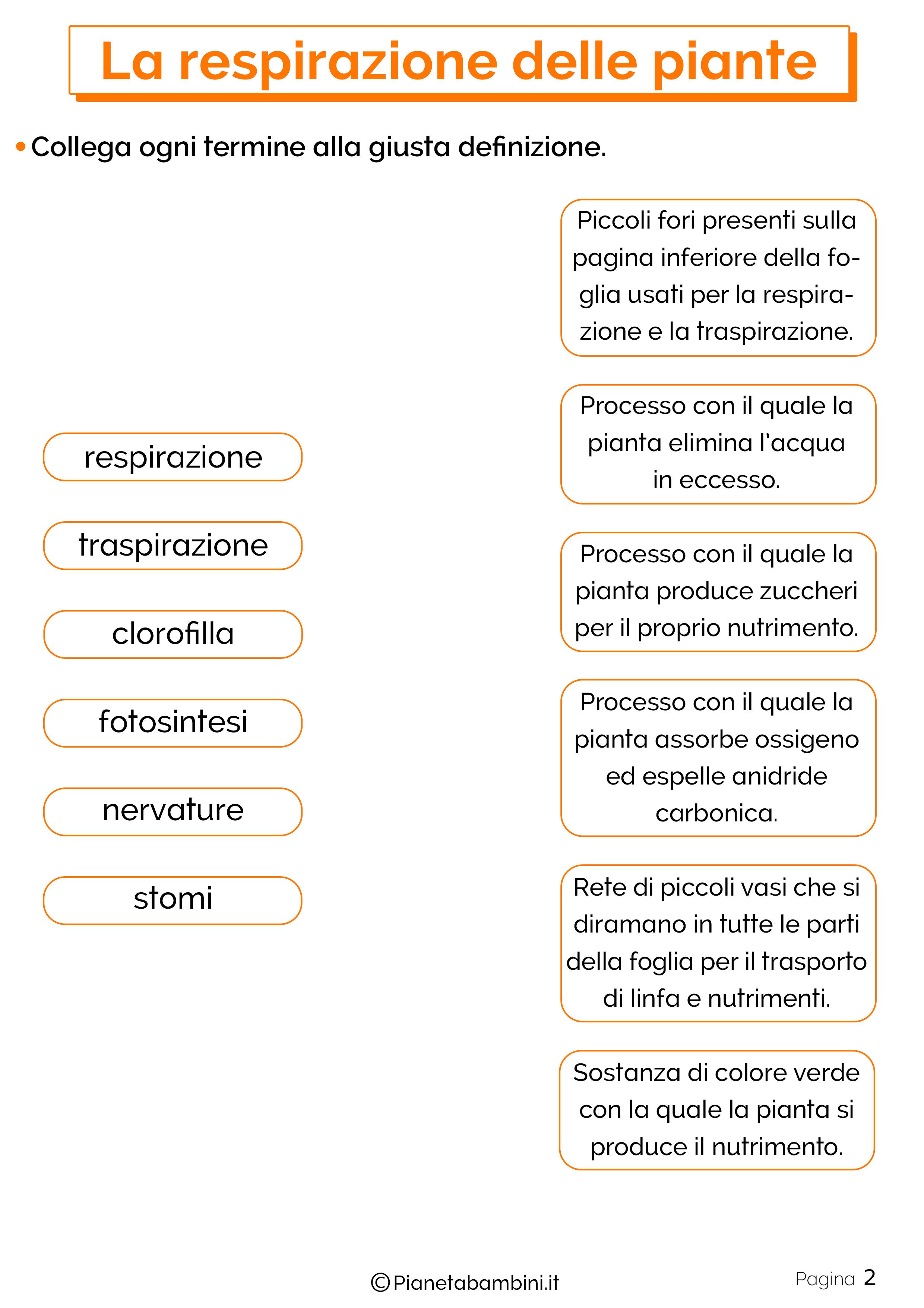 Esercizi sulla respirazione delle piante 2