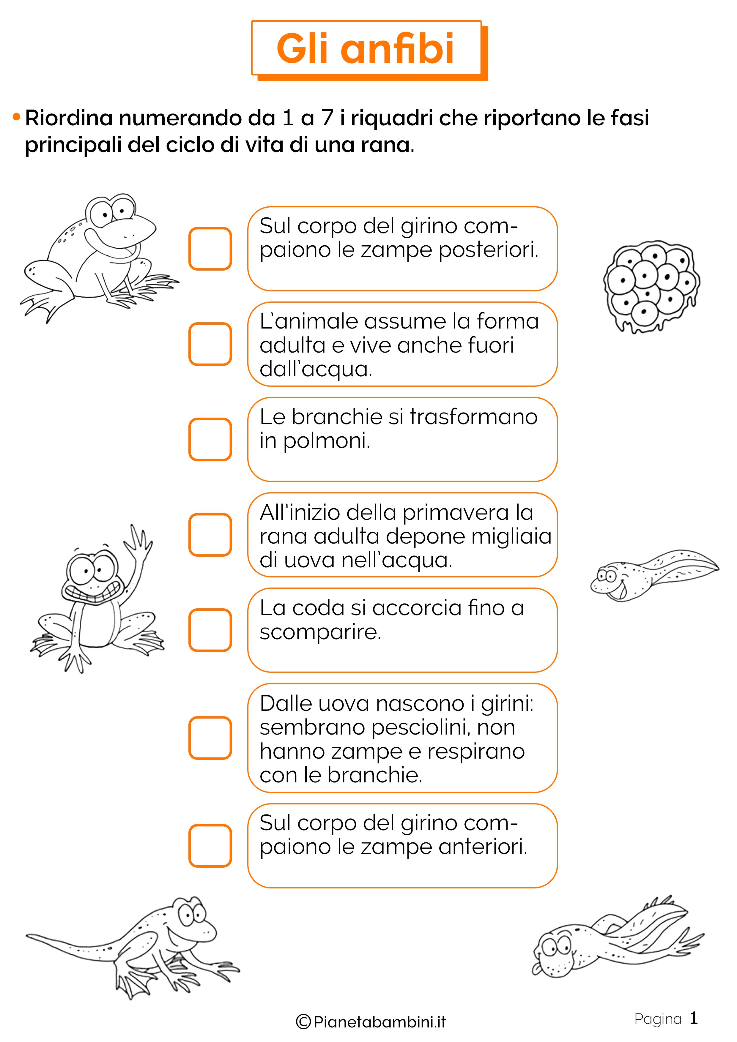 Esercizi sugli anfibi 1