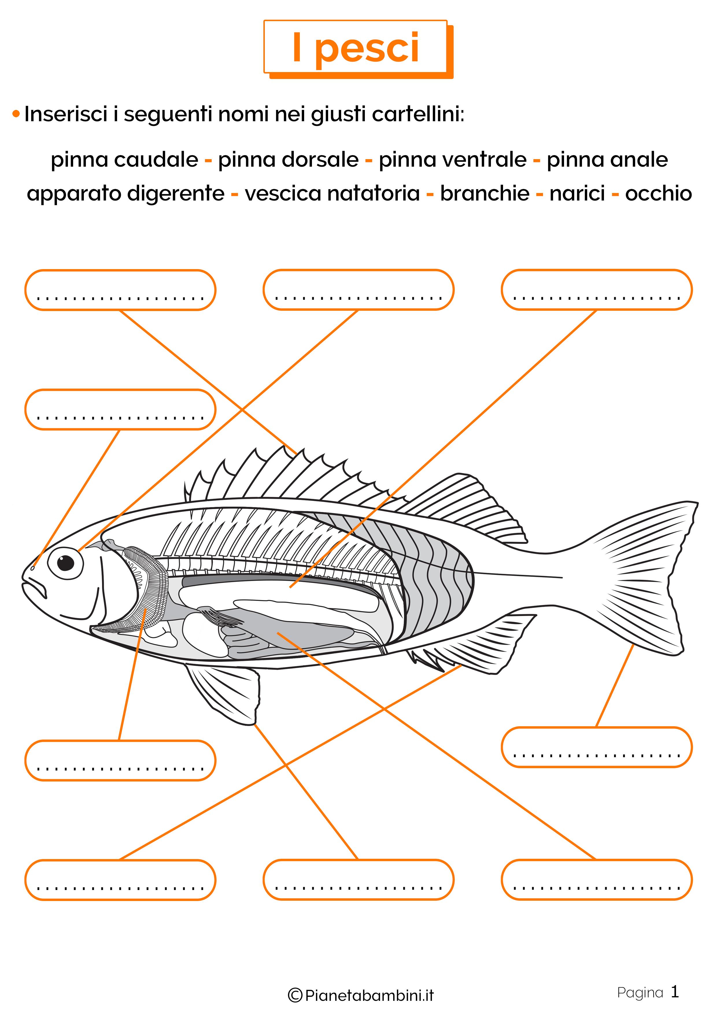 Esercizi sui pesci 1