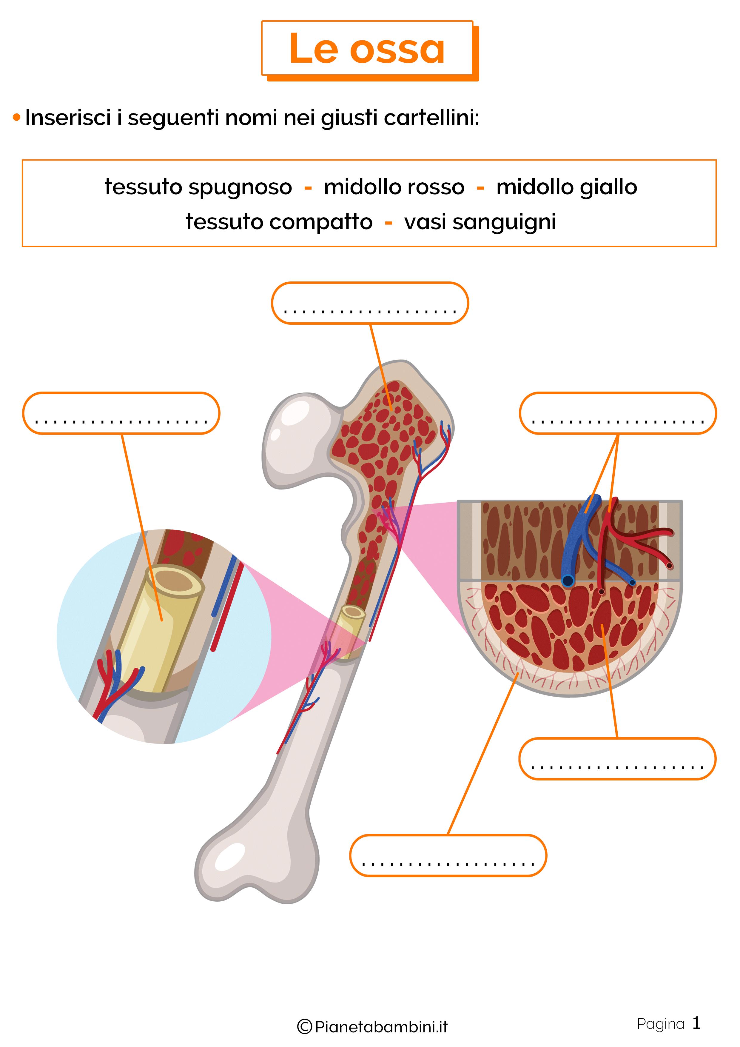 Esercizi sulle ossa 1