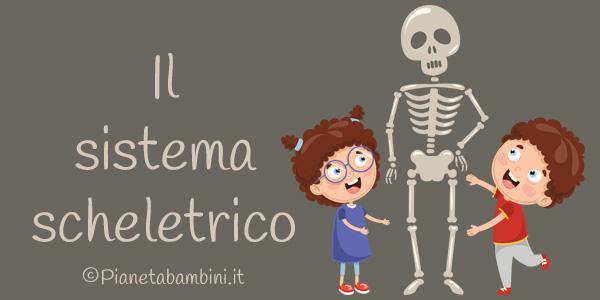 Esercizi sul sistema scheletrico per la scuola primaria