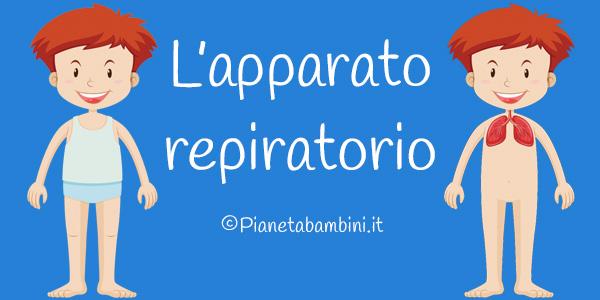 Esercizi sull'apparato respiratorio per la scuola primaria