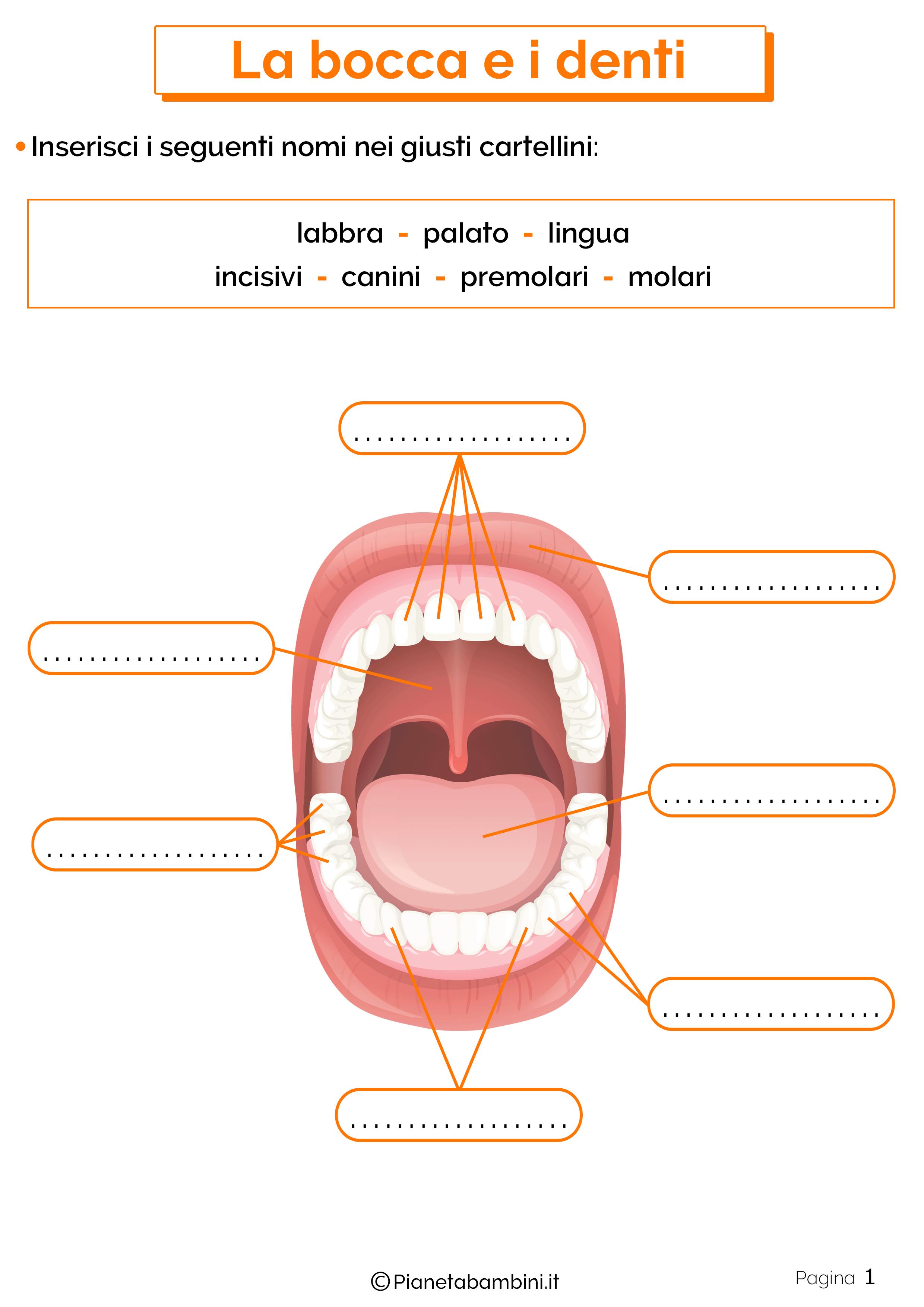 Esercizi su bocca e denti 1