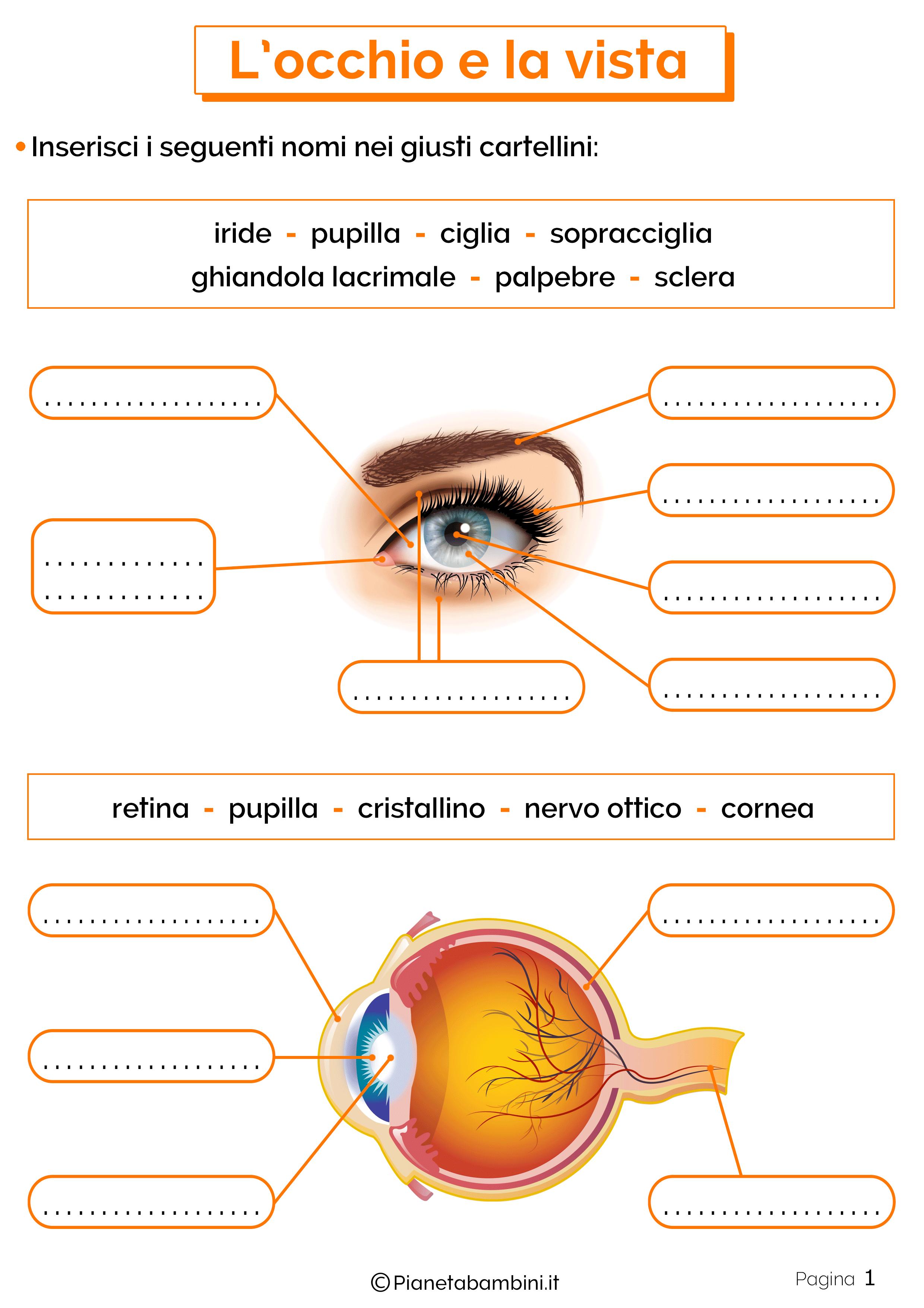Esercizi su occhio e vista 1