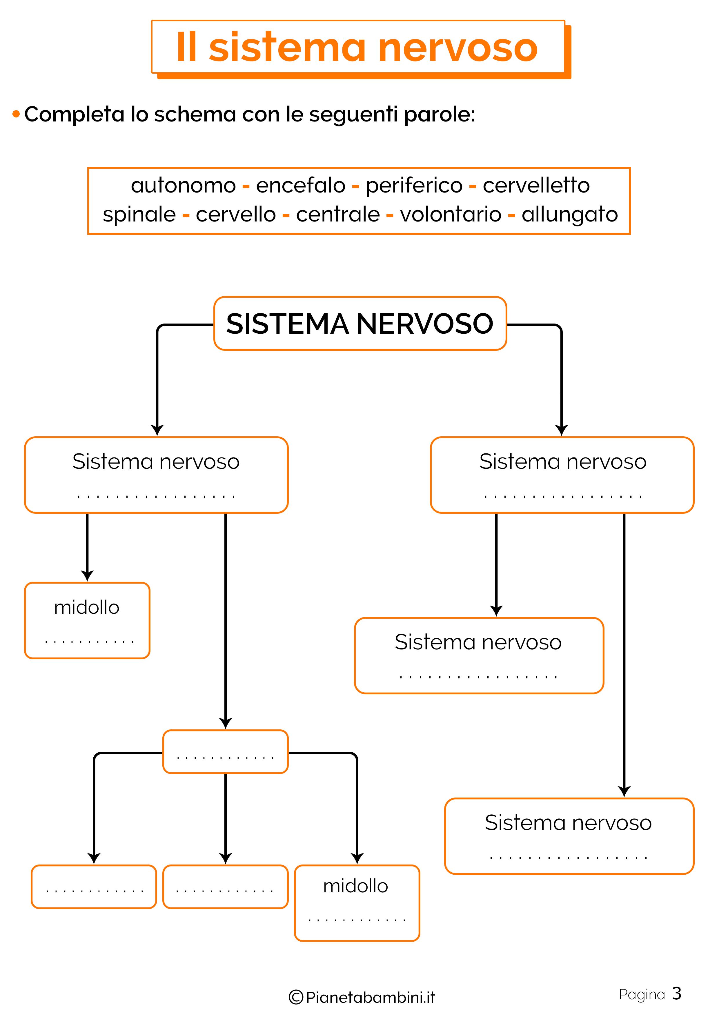 Esercizi sul sistema nervoso 3