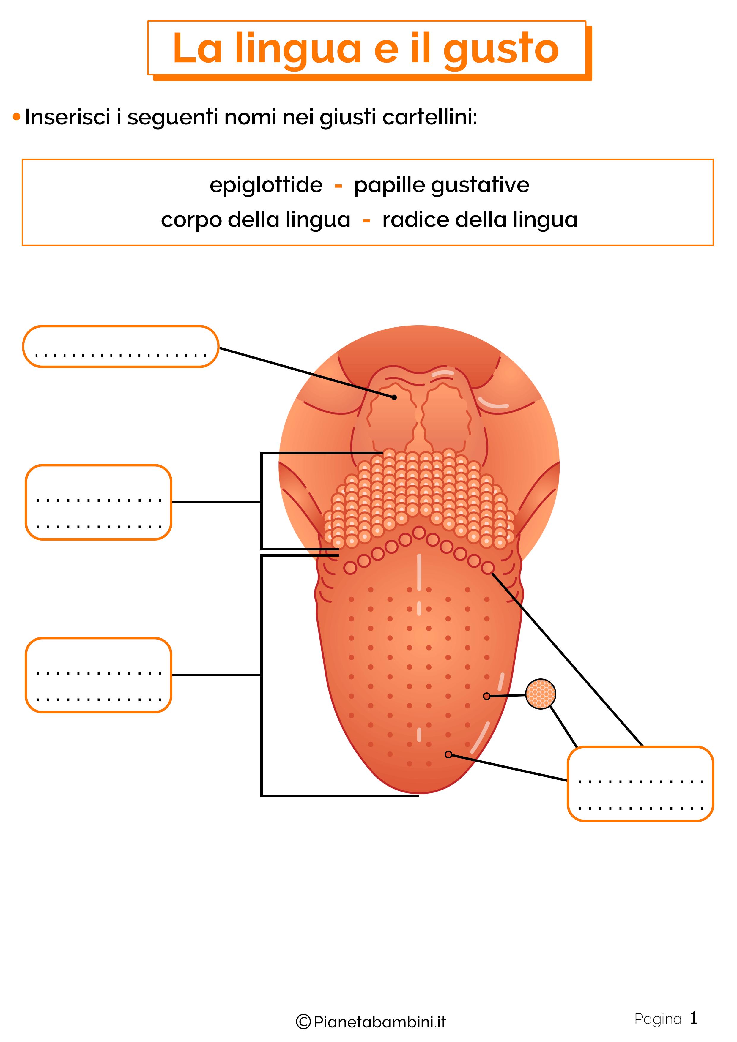 Esercizi su lingua e gusto 1