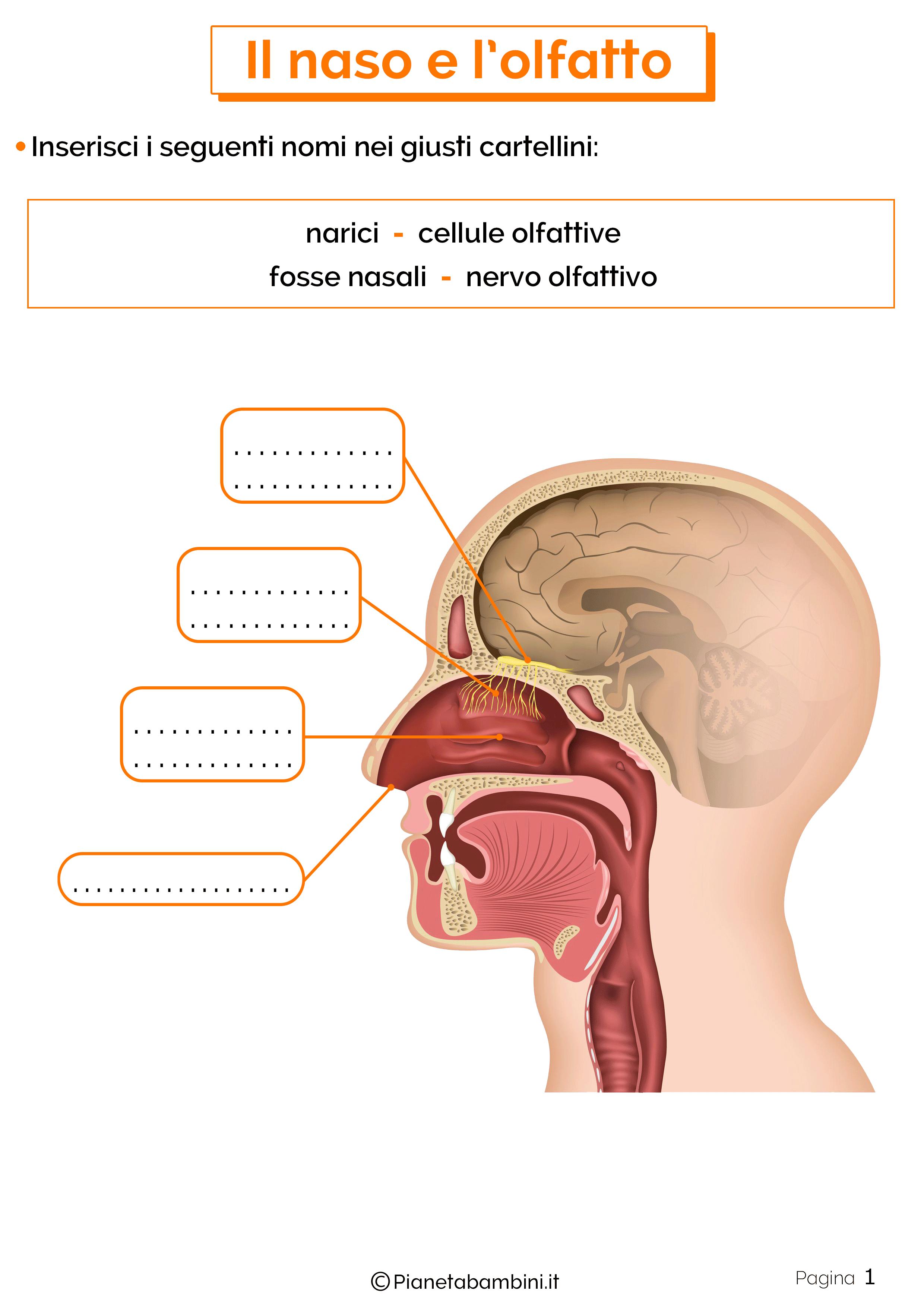 Esercizi su naso e olfatto 1