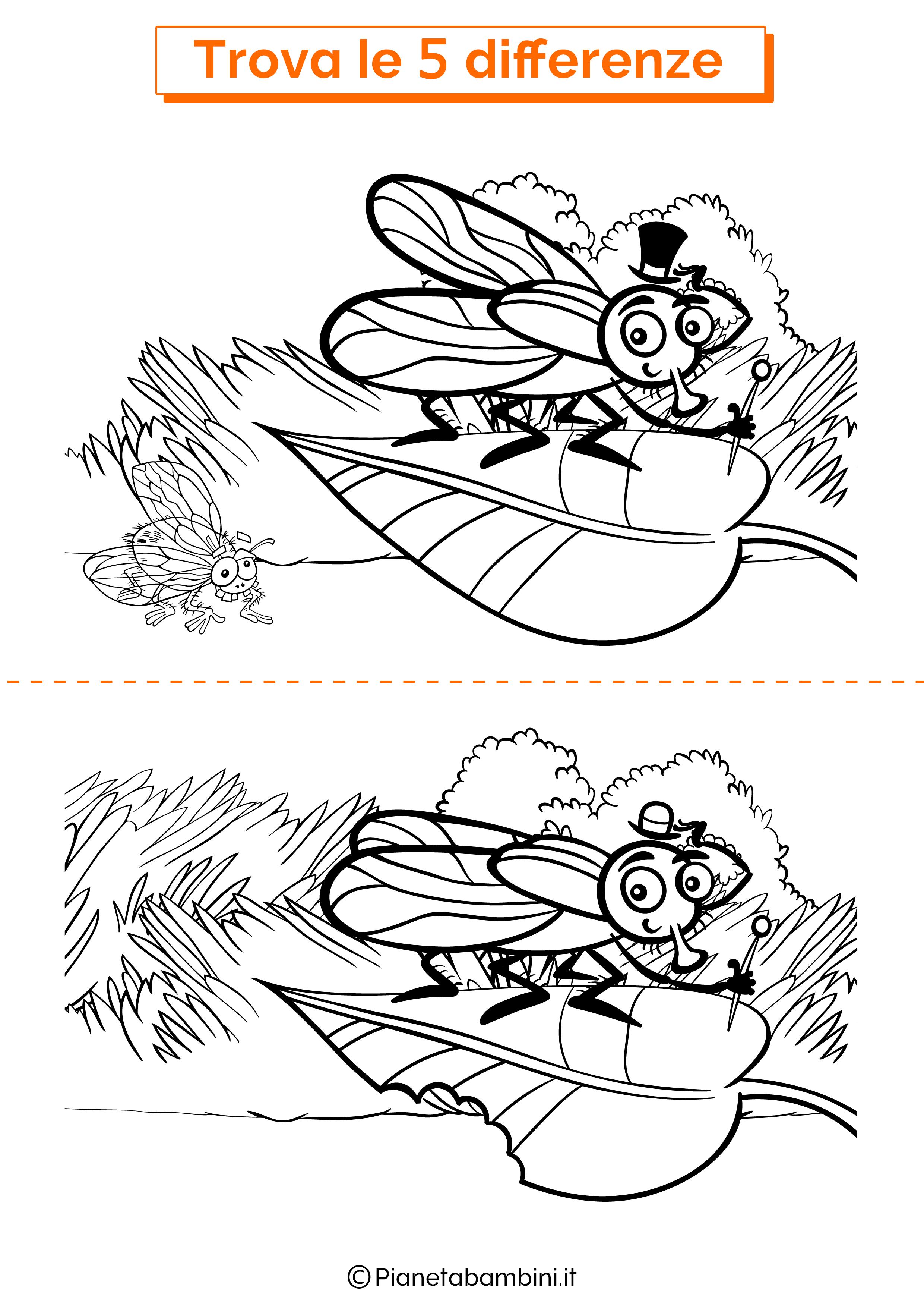 Disegno trova 5 differenze mosca