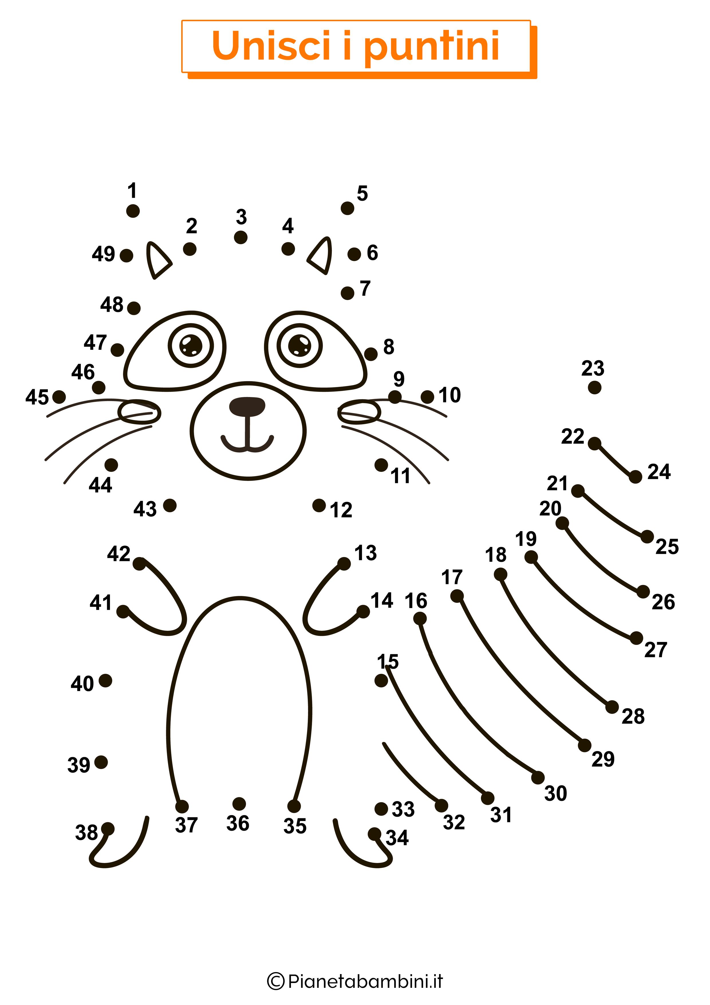 Disegno unisci i puntini da 1 a 50 procione